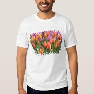 Netherlands (aka Holland), Lisse. Keukenhof Tshirts