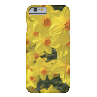 Netherlands, Holland, Lisse, Keukenhof Gardens, Barely There iPhone 6 Case