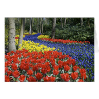Netherlands, Holland, Lisse, Keukenhof Gardens Card