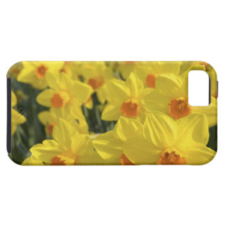 Netherlands, Holland, Lisse, Keukenhof Gardens, Tough iPhone 5 Case