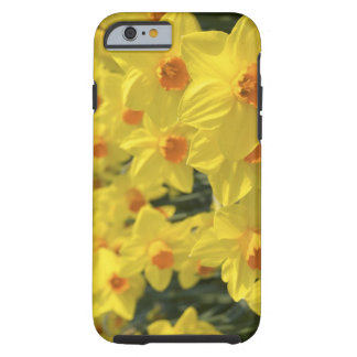 Netherlands, Holland, Lisse, Keukenhof Gardens, Tough iPhone 6 Case