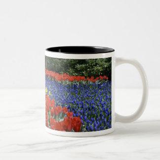 Netherlands, Holland, Lisse, Keukenhof Gardens Two-Tone Coffee Mug