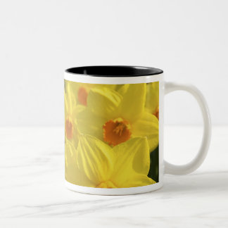 Netherlands, Holland, Lisse, Keukenhof Gardens, Two-Tone Coffee Mug