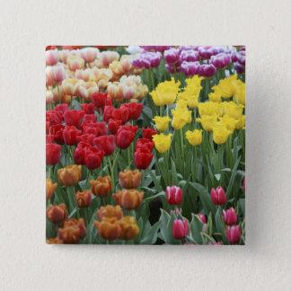 Netherlands, Keukenhoff Gardens, tulips. 15 Cm Square Badge