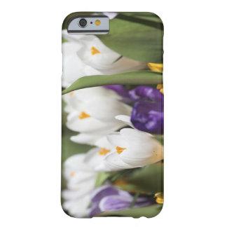 Netherlands, Keukenhoff Gardens, Tulips. Barely There iPhone 6 Case