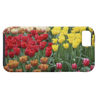 Netherlands, Keukenhoff Gardens, tulips. Case For The iPhone 5