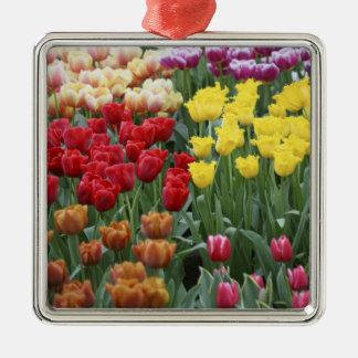 Netherlands, Keukenhoff Gardens, tulips. Christmas Ornament