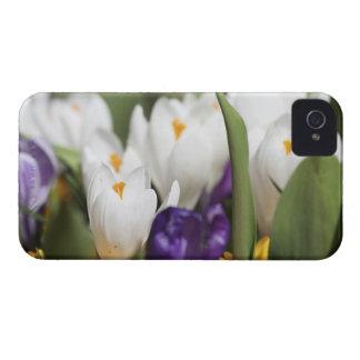 Netherlands, Keukenhoff Gardens, Tulips. iPhone 4 Cases