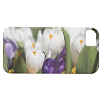 Netherlands, Keukenhoff Gardens, Tulips. iPhone 5 Cover