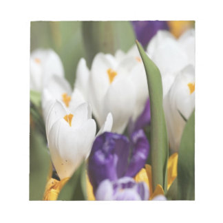 Netherlands, Keukenhoff Gardens, Tulips. Notepad