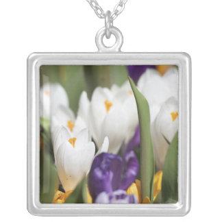Netherlands, Keukenhoff Gardens, Tulips. Silver Plated Necklace