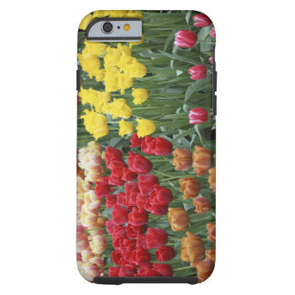 Netherlands, Keukenhoff Gardens, tulips. Tough iPhone 6 Case