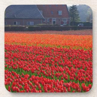 Netherlands: Tulip Field in Holland Coaster