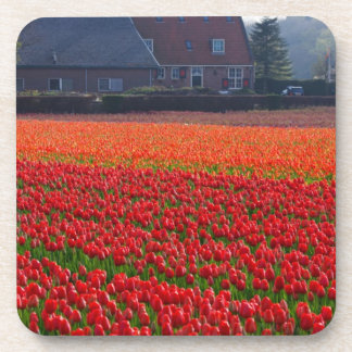 Netherlands: Tulip Field in Holland Drink Coasters