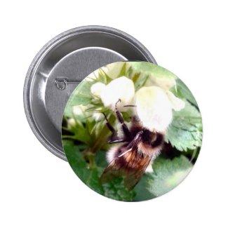 Nettle Bee