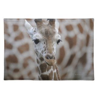 Netzgiraffe, Giraffa camelopardalis reticulata Placemat