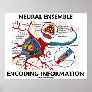 Neural Ensemble Encoding Information Poster