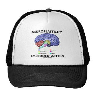 Neuroplasticity Embedded Within (Brain Anatomy) Mesh Hats