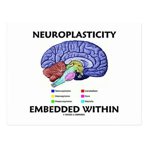 Neuroplasticity Embedded Within (Brain Anatomy) Post Card