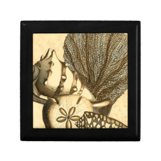 Neutral Shells and Coral Collection Small Square Gift Box