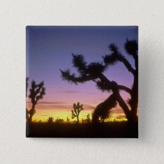 NEVADA. USA. Joshua trees Yucca brevifolia) 15 Cm Square Badge