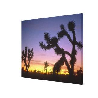 NEVADA. USA. Joshua trees Yucca brevifolia) Canvas Prints