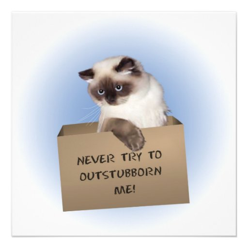 Never try to out-stubborn me! invites