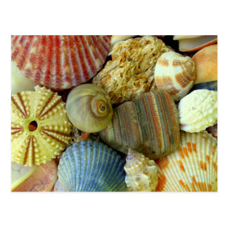 New Address Sea Urchin and Seashells Postcard