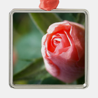 New Beginning Rose Silver-Colored Square Decoration