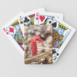 new beginning Zaz jpg Playing Cards