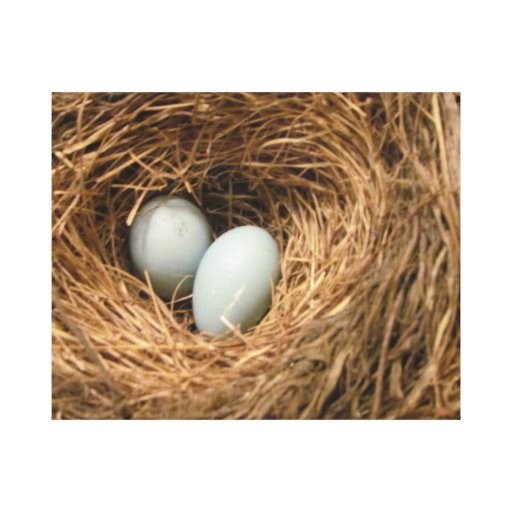 New Beginnings Bird's Nest with Robin's Eggs Gallery Wrap Canvas