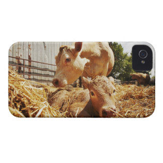 New born calf and mom Case-Mate iPhone 4 cases