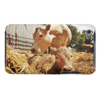 New born calf and mom Case-Mate iPod touch case