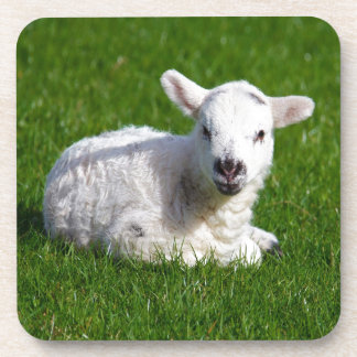 New born cute lamb on green grass coaster