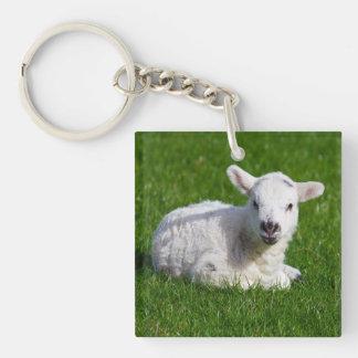 New born cute lamb on green grass key ring