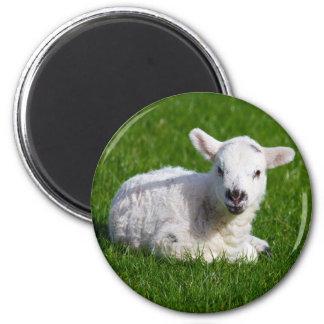 New born cute lamb on green grass magnet