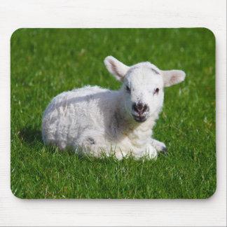 New born cute lamb on green grass mouse mat