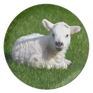 New born cute lamb on green grass plate