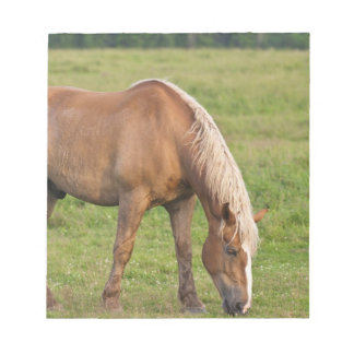 New Brunswick, Canada. Horse in field. Notepad