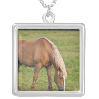 New Brunswick, Canada. Horse in field. Silver Plated Necklace