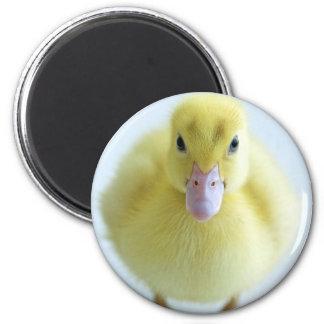 New Duckling Refrigerator Magnet