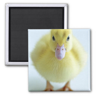 New Duckling Square Magnet