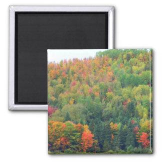 New England Autumn 073 Fridge Magnet