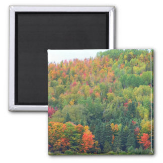 New England Autumn 073 Magnet
