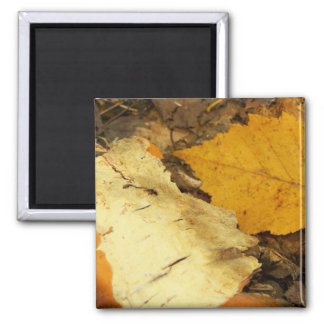 New England Autumn 51 Square Magnet