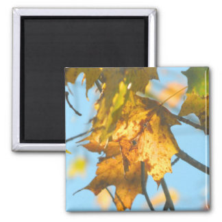 New England Fall Leaves in The Light Magnet