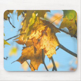 New England Fall Leaves in The Light Mouse Pad