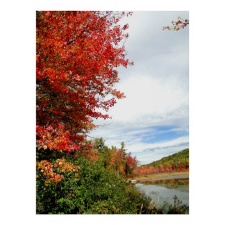 New England Maple in Fall Season Photo Poster
