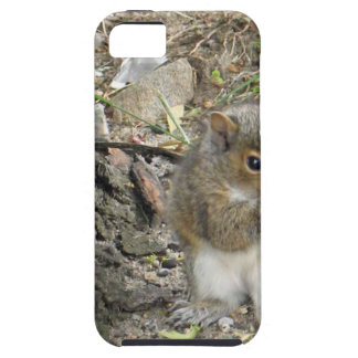 new england squirrel enjoying a tasty snack tough iPhone 5 case
