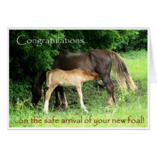 New Foal Congratulations Card